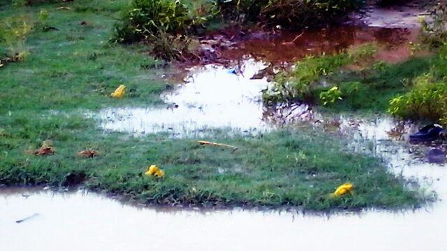 मलेरिया कुण्ड के किनारे पीले मेढ़क दिख रहे हैं - वेदपाठ करते।