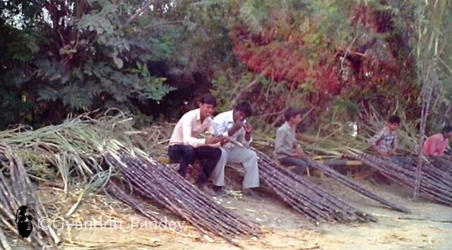 पुल के किनारे फाफामऊ में गन्ना बेंचते-चूसते लोग।