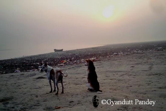 सवेरे का सूरज, गंगा नदी और कुकुर।