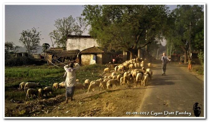 गांव में अजिज्ञासु (?)प्रवृत्ति