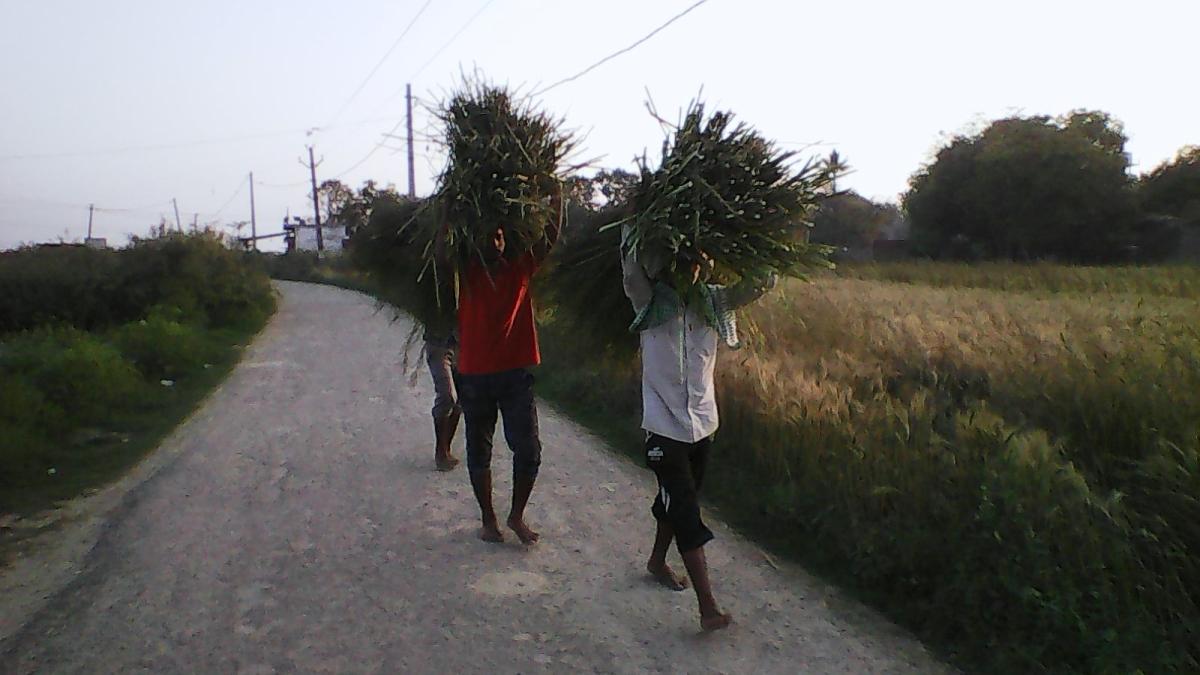 कोविड19, दहशत, और शहर से गांव को पलायन – रीता पाण्डेय कीपोस्ट
