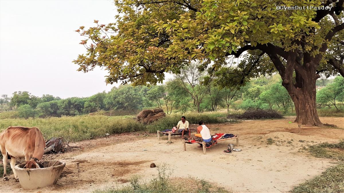 पूर्वांचल में कोरोना प्रसार का प्रारम्भ है यह।#गांवकाचिठ्ठा