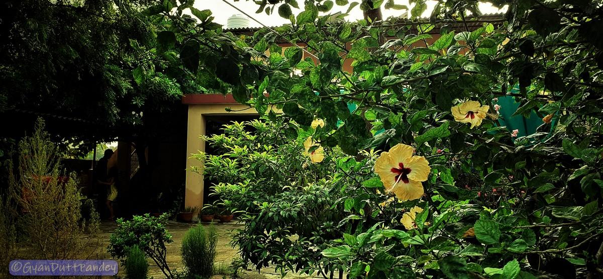 नई पौध के लिये नर्सरी तो जाना ही है!#गांवकाचिठ्ठा
