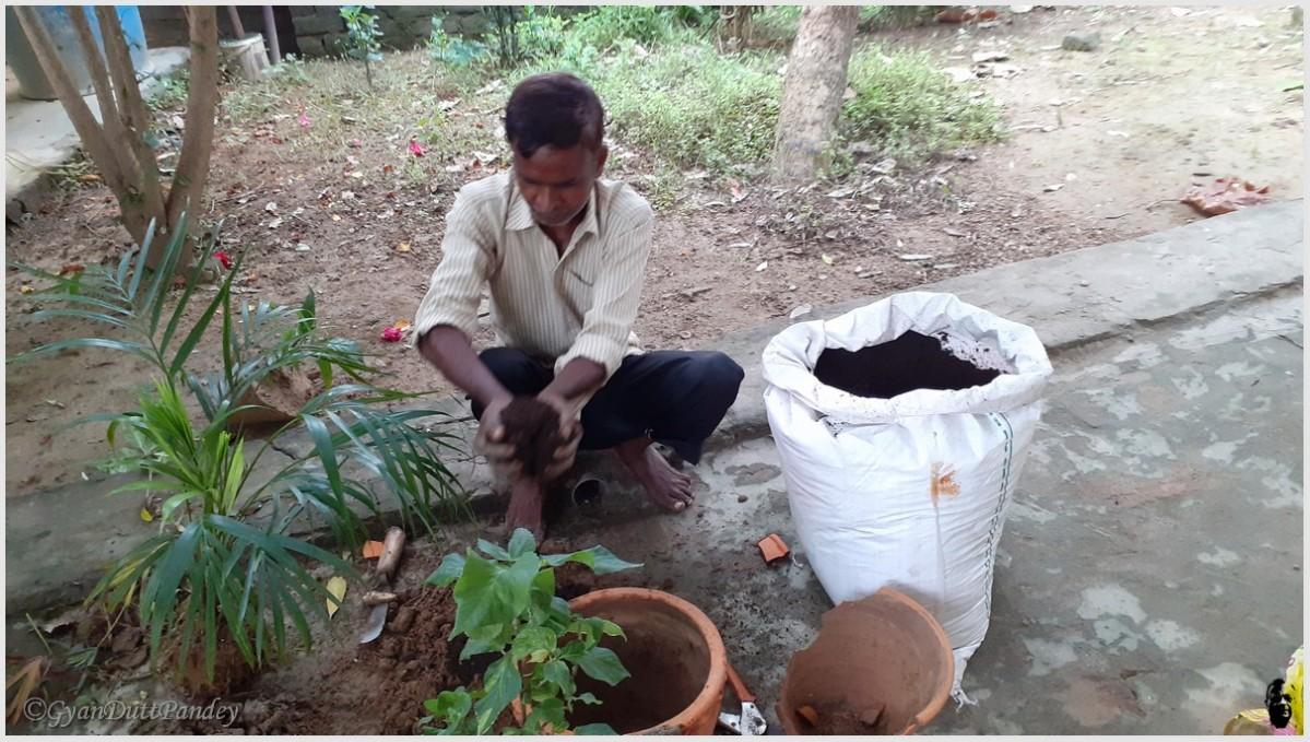 राम सेवक के बागवानीटिप्स
